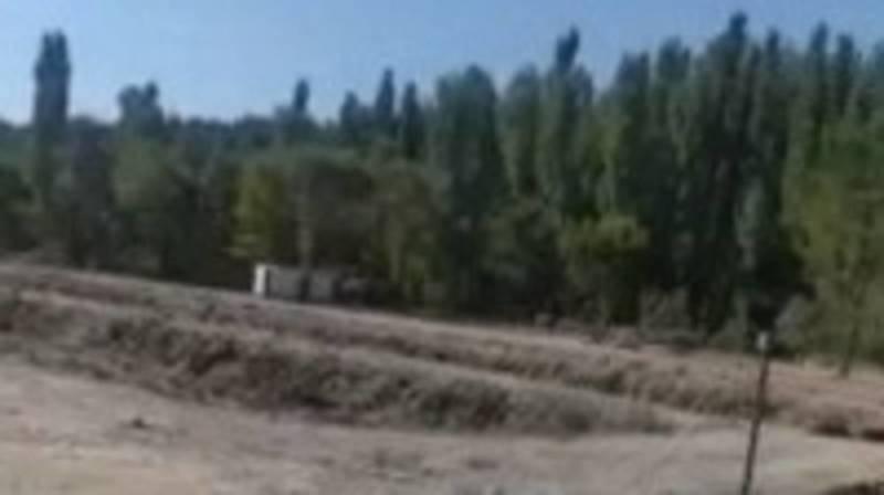 В заказнике возле Токмока вырубаются деревья, - местный житель. Видео