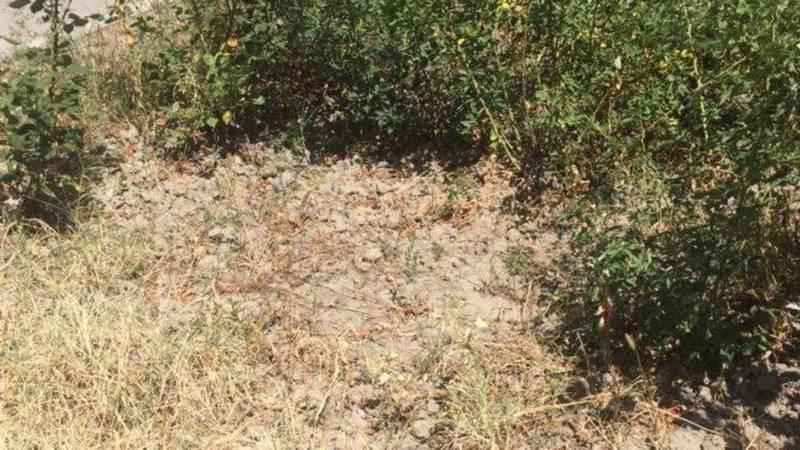Кусты и газон возле кинотеатра «Россия» засыхают, - бишкекчанка