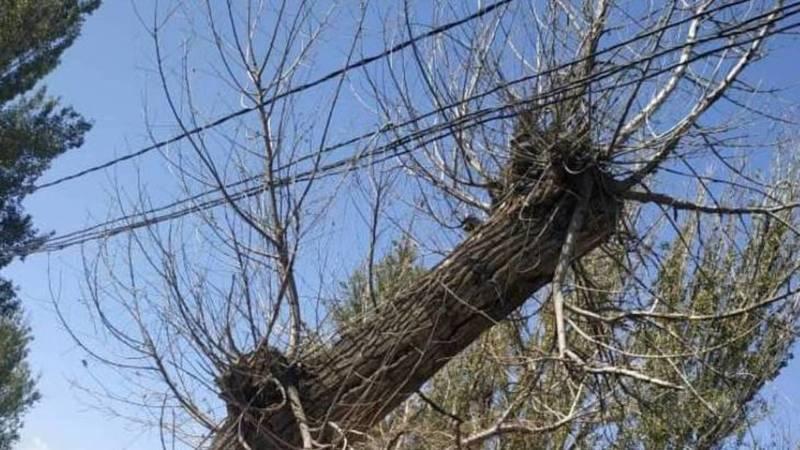 Горожанин просит убрать аварийное дерево на ул.Тоголок Молдо