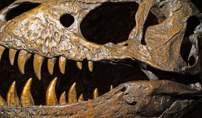 _95207159_tyrannosaurus_rex_dinosaur_skull-spl