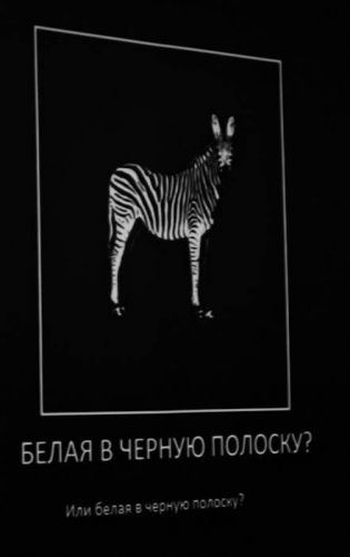 zhascamp41