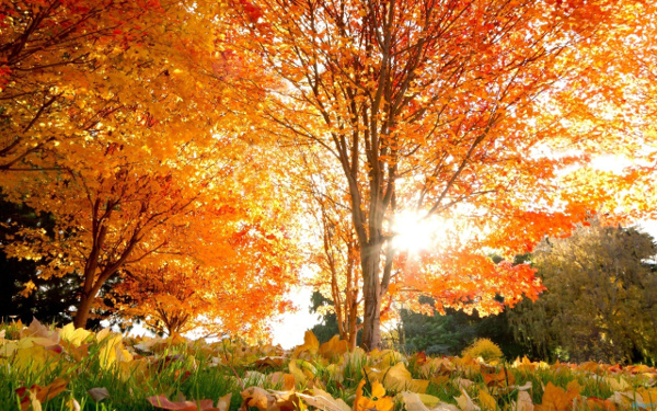 Nature_Seasons_Autumn_Golden_autumn_in_park_036833_