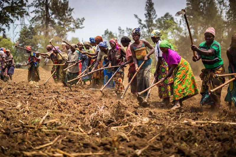 северное Киву, на востоке Конго
