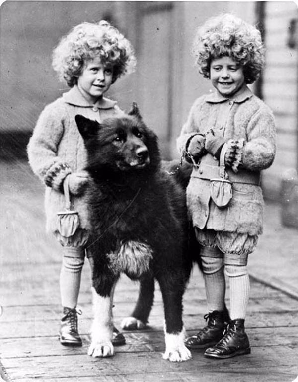 Собака-герой Балто.