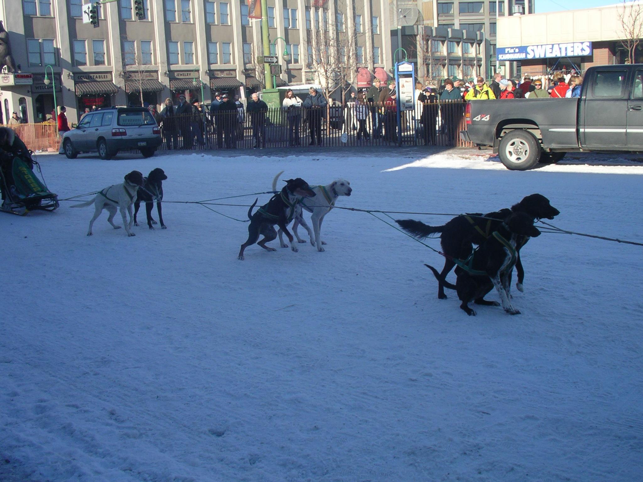 Ежегодный зимний конкурс в собачьих упряжках в Анкоридже, Аляска