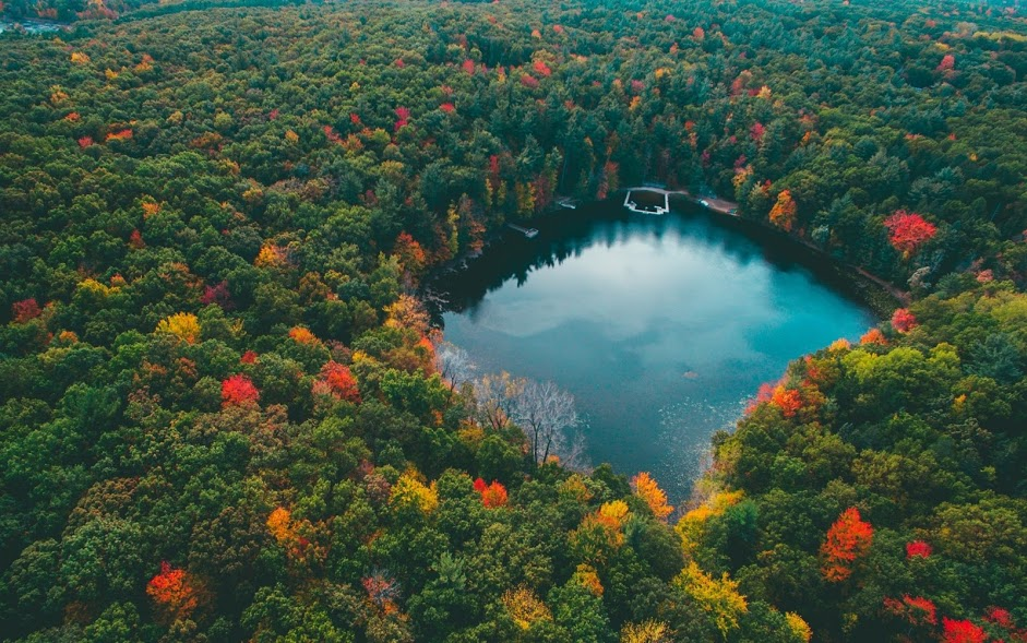 275917-landscape-nature-forest-lake-colorful-fall-trees-water-blue-red-yellow-green-aerial_view