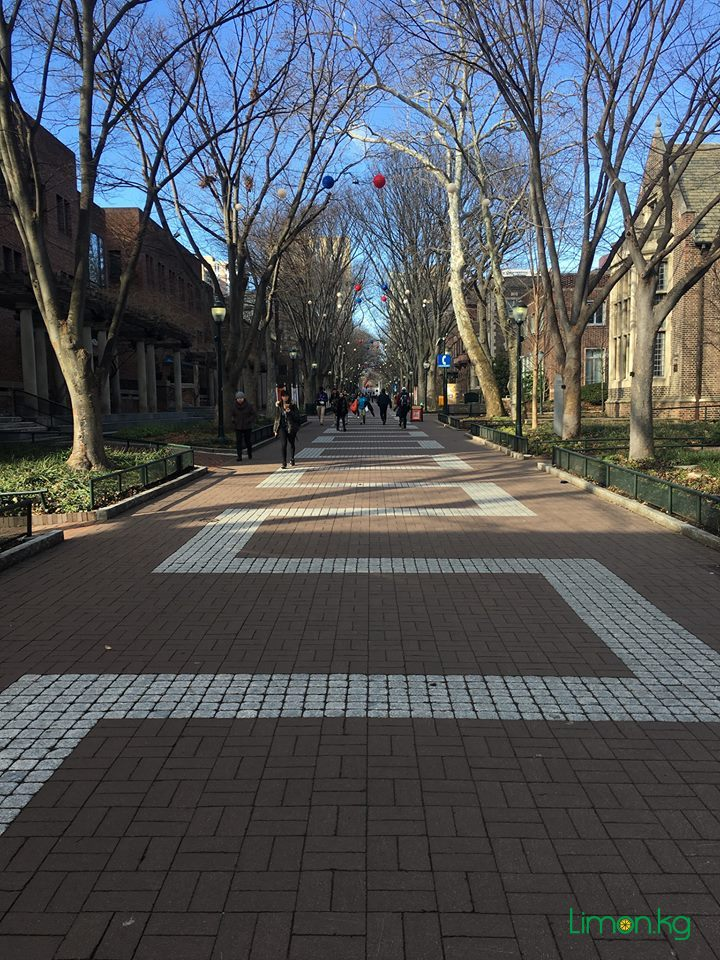 13. Аллея Locust Walk между зданиями Университета Пенсильвании