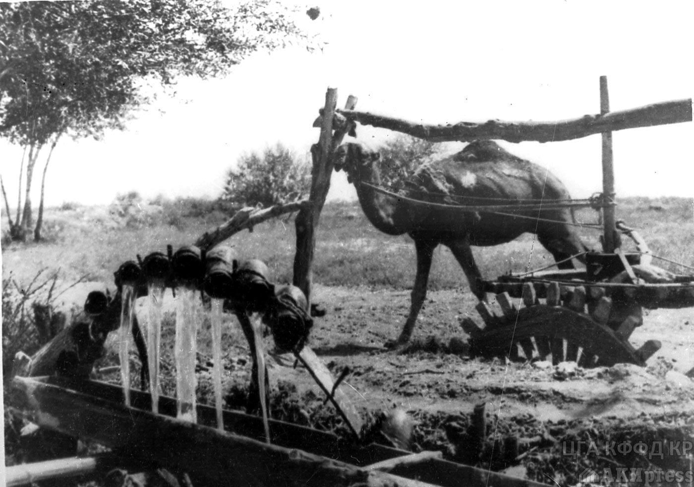 Чигирь - «Колесо жизни», с помощью которого поливались высокие земли