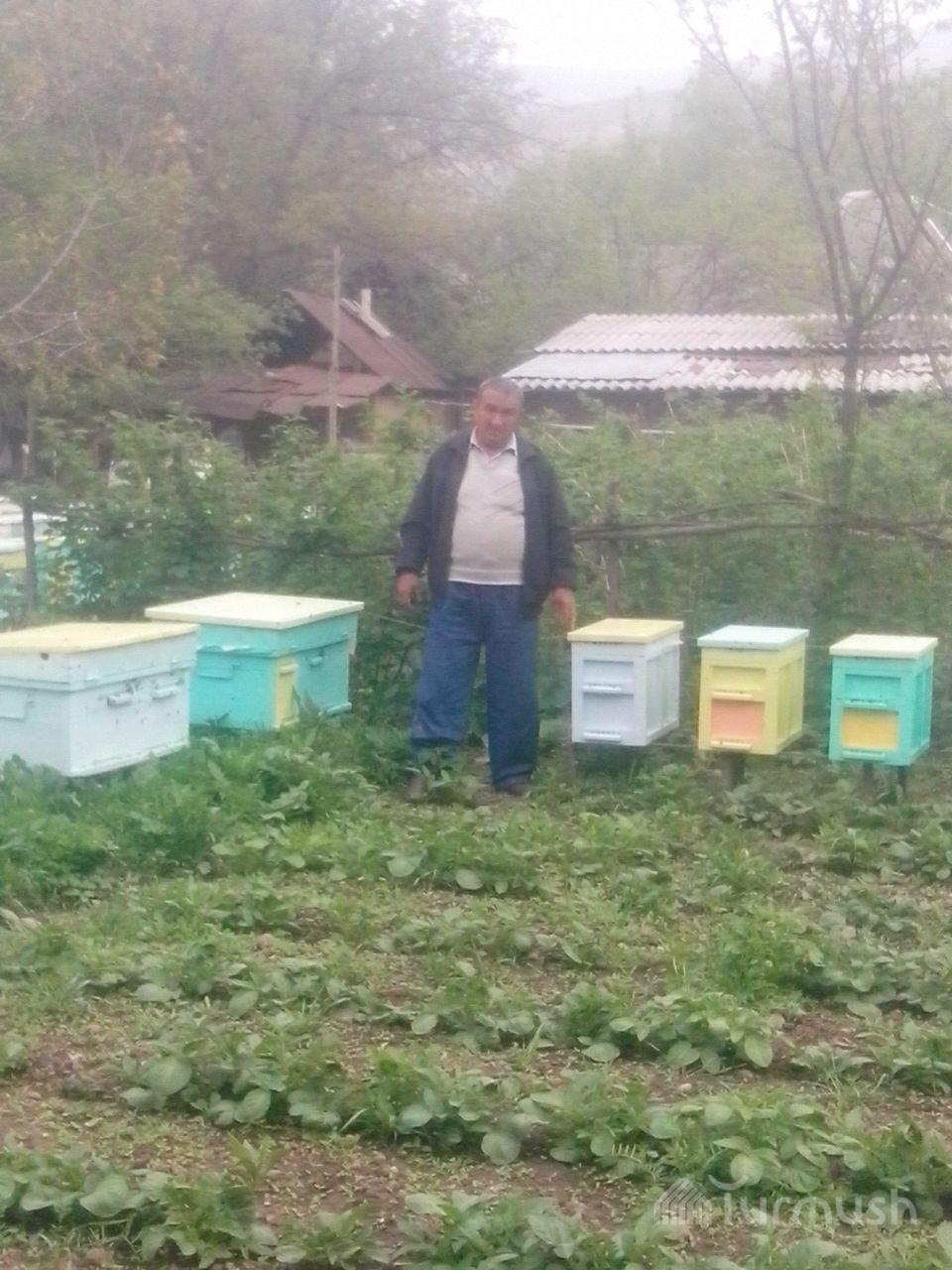 Как приманить пчел: цветы медоносы в саду 60