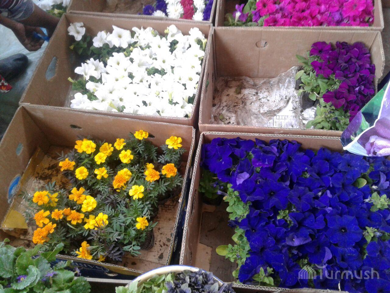 Рассада цветов - способы посева, выращивание, пошаговые инструкции 92