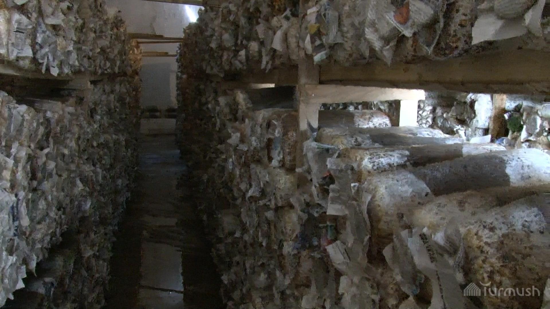 Выращивание грибов в домашних условиях вешенки в мешках