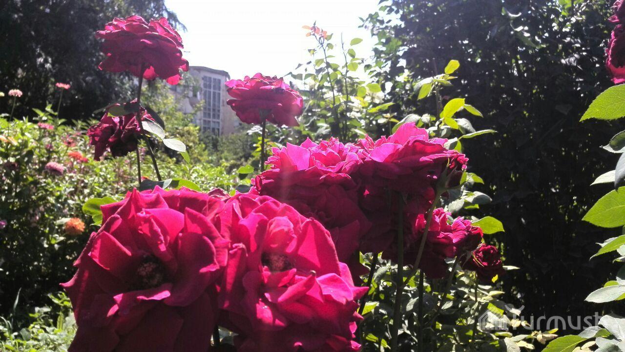 Порна в киргизий роза аманова