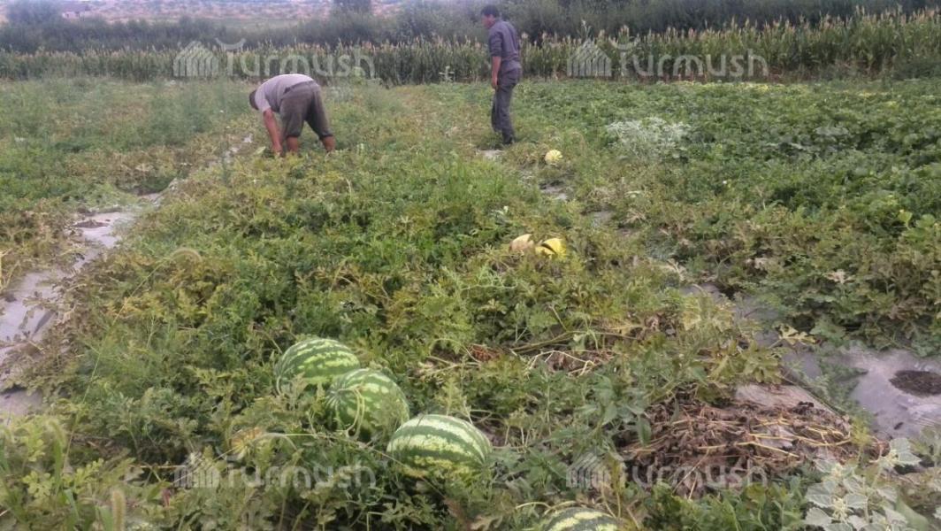 Бизнес план выращивание арбузов 14