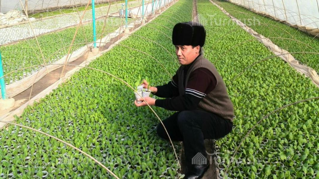 Как выращивают рассаду на продажу 396