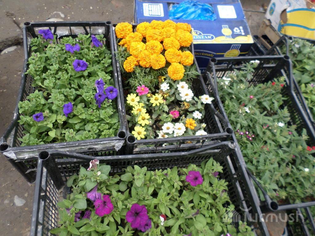 Кто продает рассаду цветов 870