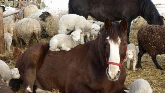 Правительство утвердило положение о порядке осуществления частной ветеринарной практики в Кыргызской Республике