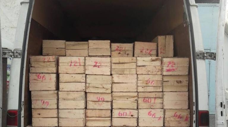 Таможня пресекла контрабандный ввоз 2,9 тонны мандаринов из Таджикистана