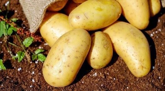 Узбекистан сократил импорт картофеля из Казахстана