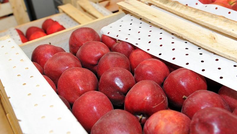 Минэкономики предложило освободить от НДС поставку торгово-логистическим центром сельхозпродукции