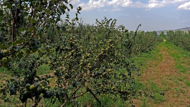 За 25 лет в сельское хозяйство Кыргызстана привлечено свыше $1 млрд инвестиций, - Минфин