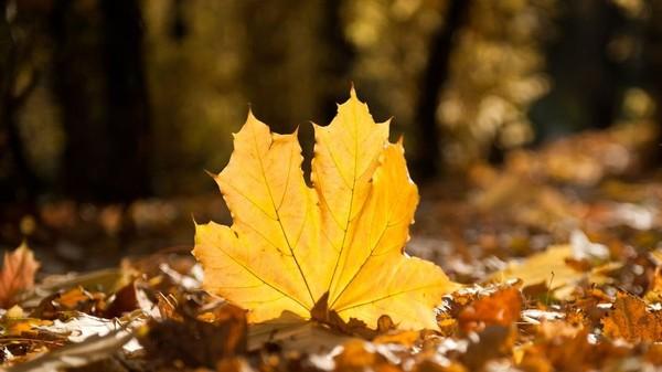До 20 градусов тепла ожидается в последние выходные октября в регионе.