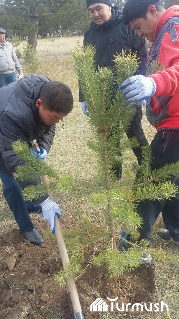 Технология выращивания хвойных деревьев 98