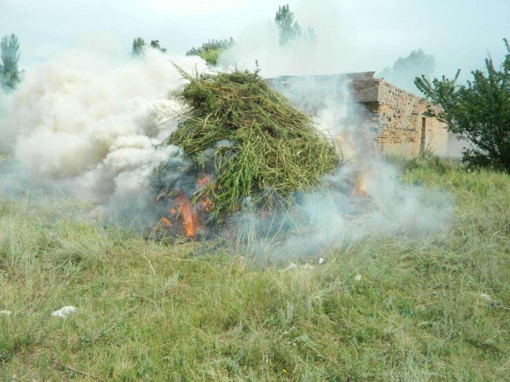 План по выявлению и уничтожению очагов дикорастущей конопли сайт шишки конопля