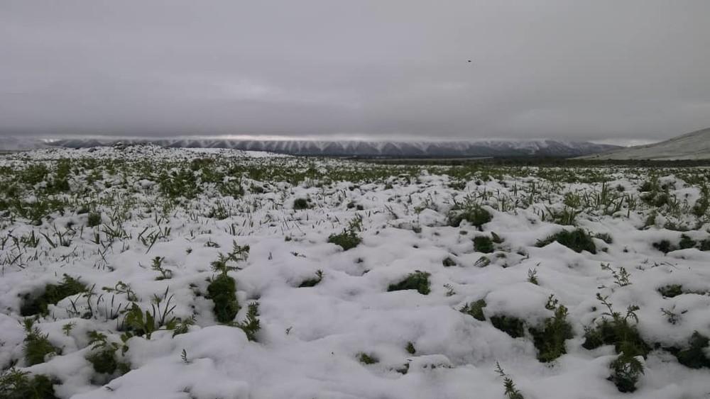 Снег в Суусамырской долине