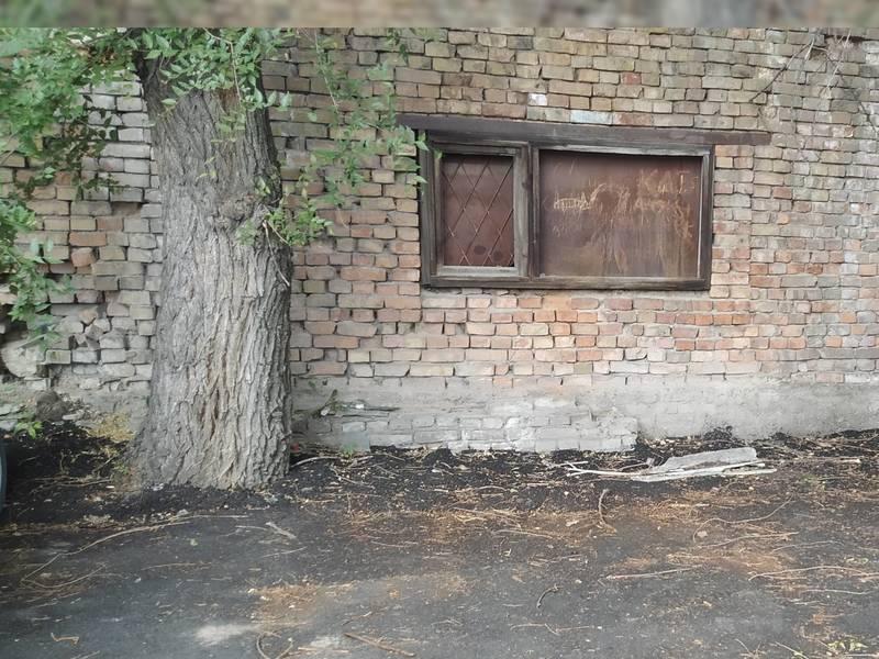 Почему на улице Орозбекова деревья «закатали» в асфальт, не оставив место для прикорневого круга? – бишкекчанин