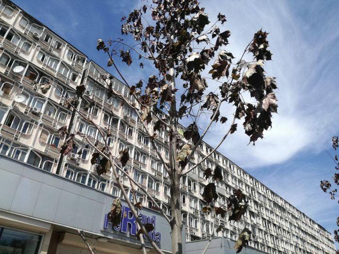 Бишкекчанин просит полить саженцы на участке проспекта Чуй (фото)