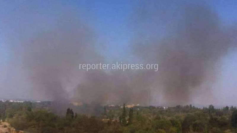 В Ботсаду произошел пожар <i>(фото)</i>