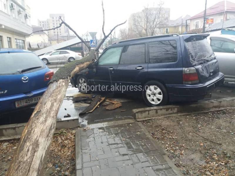 На Калыка Акиева-Абдумомунова большое дерево упало на машину. Фото