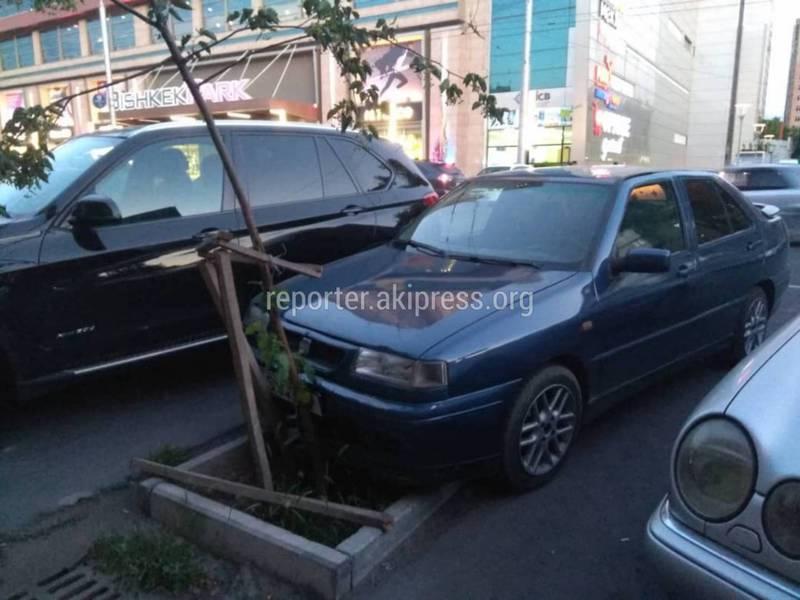 На Киевской–Керимбекова водитель «СЕАТ» припарковался, повредив молодое дерево (фото)