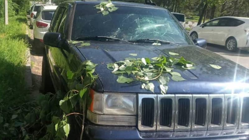 На ул.Ибраимова упавшая ветка дерева разбила лобовое стекло машины. Фото