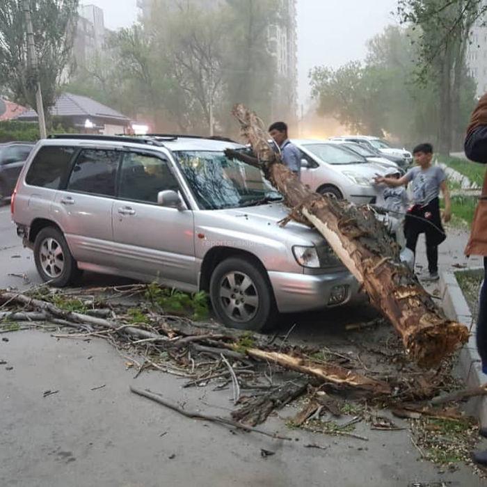 <b>Сильный ветер в Бишкеке валит деревья</b>. Фото и видео от очевидцев