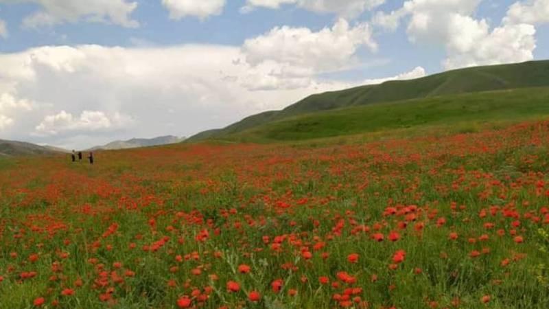Красота природы Таласской области. Фото местной жительницы