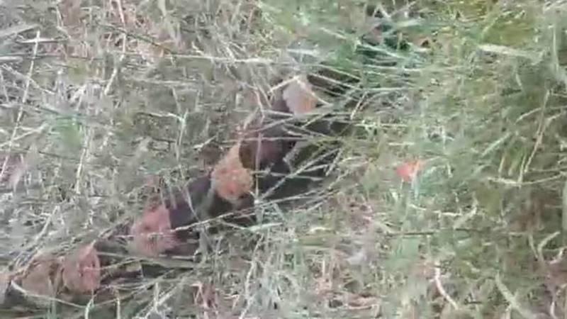Огромная змея возле Космопарка. Императорского удава выгуливали сотрудники мини-зоопарка