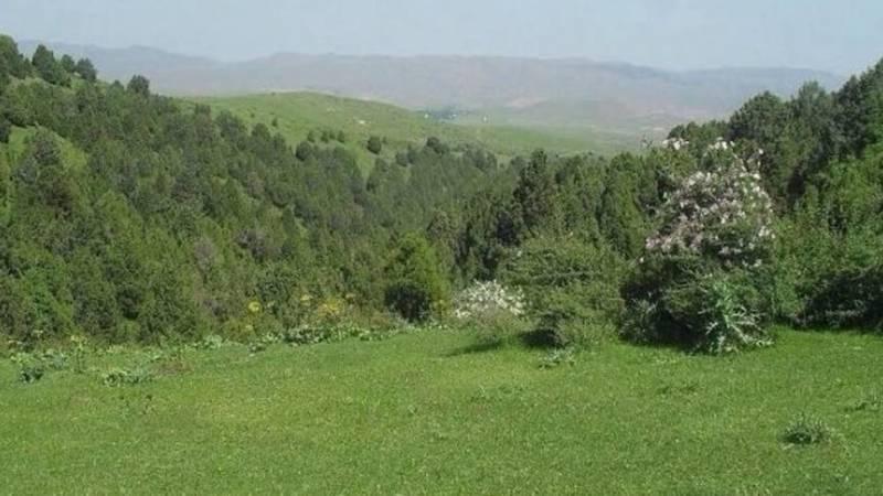 Красота села Тамаша Баткенской области. Видео