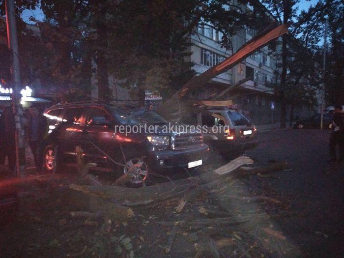 Огромное дерево упало на припаркованную «Тойоту Секвойю» и задело «Джип» <i>(фото, видео)</i>