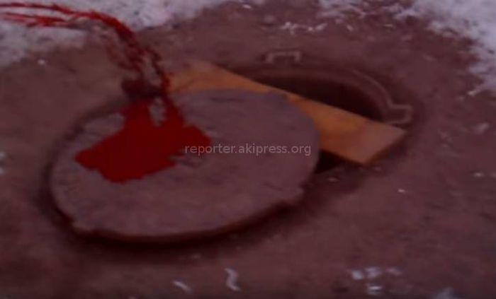 В столичном 3 мкр неизвестные отстрелили 2 собак, - читатель Андрей (видео)