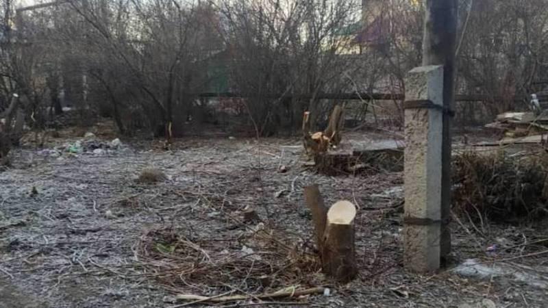 На Фере-Дачной в Бишкеке срубили деревья, - очевидец