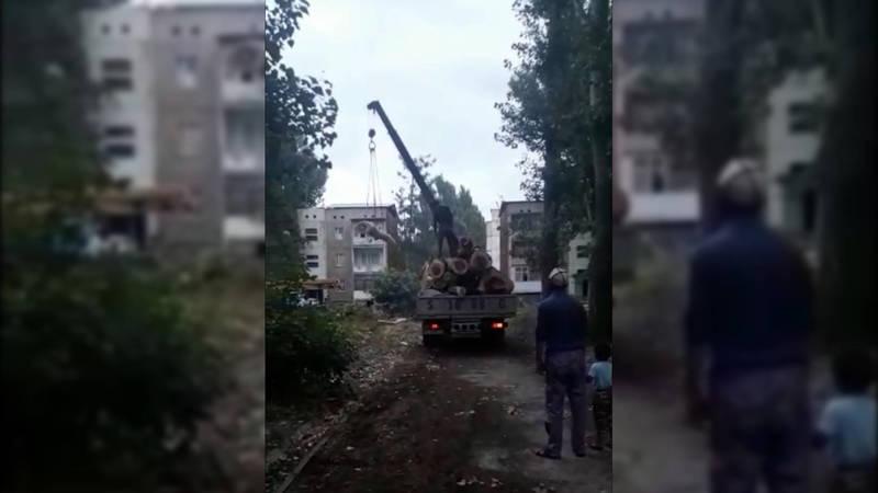 В городе Каинда идет вырубка деревьев. Видео