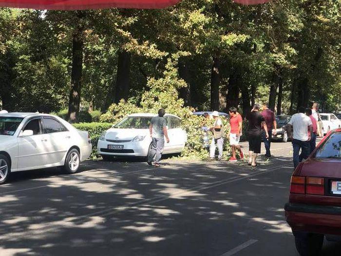 Фото — Возле парка Панфилова большая ветка упала на машину