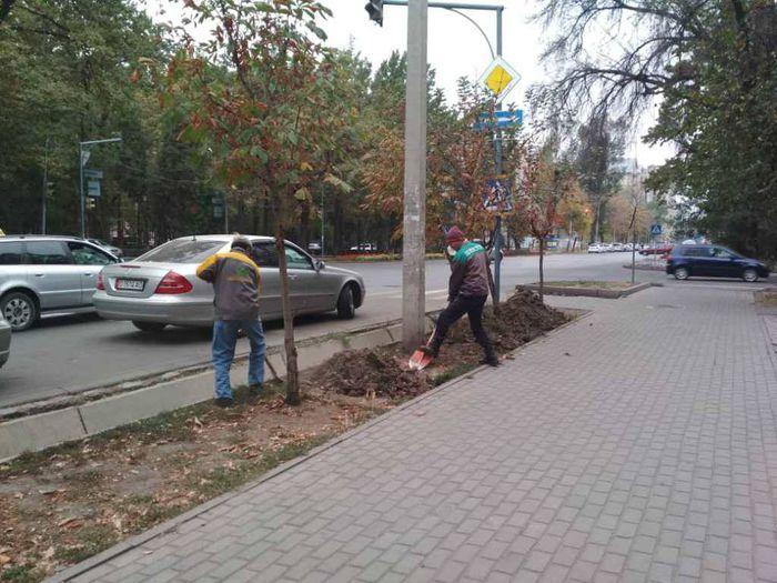 «Бишкекзеленхоз» начал работы по понижению газона на улице Токтогула (фото)