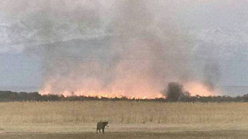 На южном берегу Иссык-Куля произошел пожар (фото, видео)