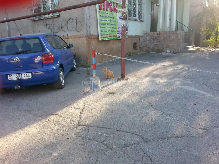 Почему нет никакой реакции со стороны городских служб на ограждение из цепи возле дома №21 в 3 мкр? - бишкекчанин (фото)