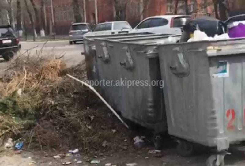 Жители Бишкека просят передвинуть мусорные баки на ул.Чуйкова (видео)