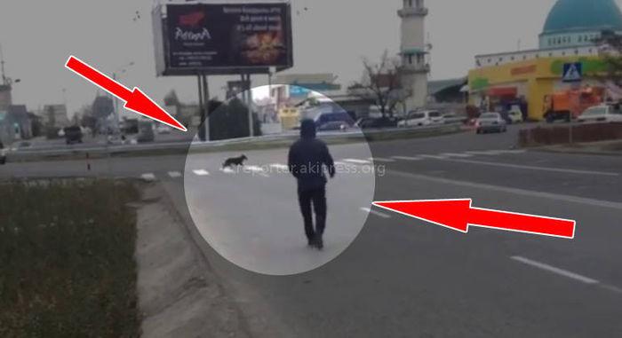 В районе ботсада собака переходит дорогу по «зебре», а парень — по трассе <i>(видео)</i>