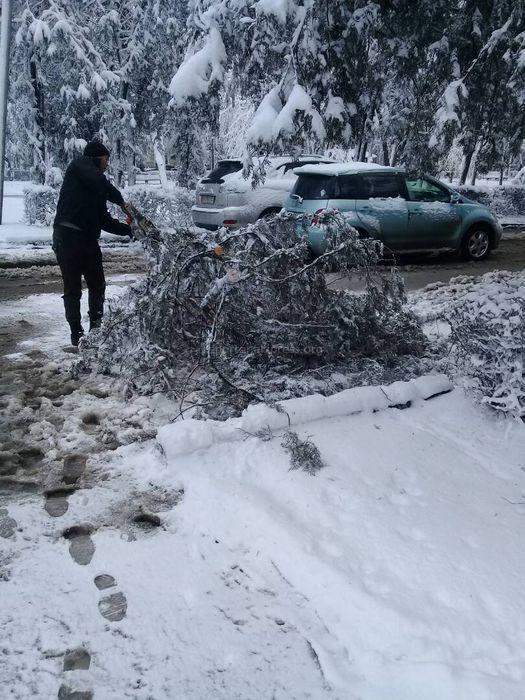 «Зеленстрой» убрал упавшее дерево на бульваре Эркиндик <i>(фото)</i>