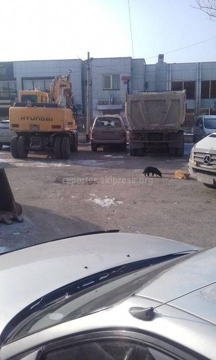 Законно ли идет подготовка к строительству на территории муниципальной стоянки в 7 мкр? - житель (фото)